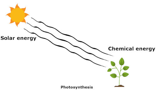 photosynthesis showing law of conservation of energy in which solar energy is converted into chemical energy